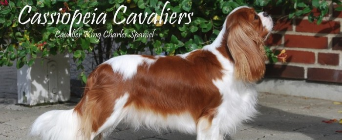 cassiopeia-cavaliers.dk